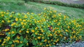 Цветки красоты желтые на саде стоковые изображения rf