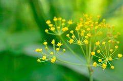 Цветки красоты Стоковая Фотография RF