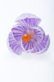 Цветки крокуса Стоковое Фото