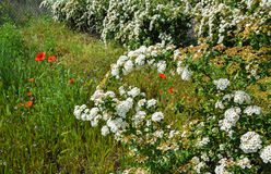 Цветки куста стоковое фото