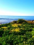 Цветки к океану Стоковые Изображения