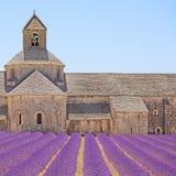 Цветки лаванды аббатства Senanque. Gordes, Luberon Стоковые Фотографии RF