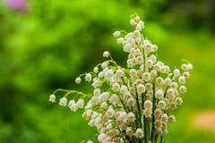 Цветки ландыша на зеленой предпосылке Поздравительная открытка весны Открытка, карточка дня матери s с лилией  Стоковые Фотографии RF