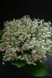 Цветки ландыша на черной предпосылке 4 стоковые изображения rf
