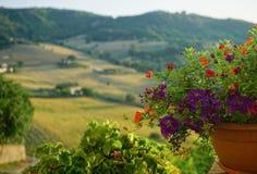 Цветки лета в патио Стоковое Фото