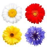 Цветки лета изолированные на белой предпосылке Стоковые Фотографии RF