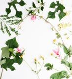 Цветки лета на белой предпосылке Свадьба, лето, романская концепция Стоковое Изображение