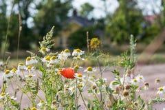 Цветки лета сада Стоковое Фото
