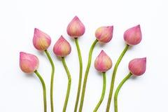 Цветки лотоса на белизне стоковые фотографии rf