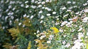 Цветки луга стоковые фотографии rf