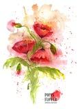 Цветки мака букета красные на белой предпосылке изображение иллюстрации летания клюва декоративное своя бумажная акварель ласточк Стоковые Фотографии RF