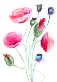 Цветки мака, иллюстрация акварели Стоковые Изображения