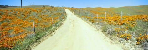 Цветки & маки, долина антилопы, Калифорния Стоковое Изображение RF