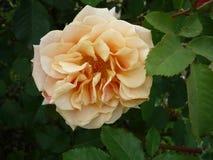 Цветки макроса в саде Стоковое Фото