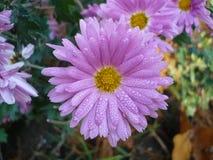 Цветки макроса Стоковое Фото