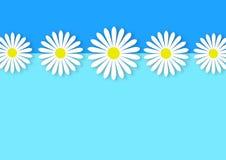 Цветки маргаритки выравниваются в голубой предпосылке стоковая фотография