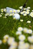 цветки маргаритки клуба шарика идут гольф Стоковые Фото