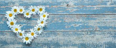 Цветки маргаритки на деревянной предпосылке Стоковое Изображение
