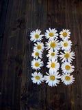 Цветки маргаритки на темной таблице Стоковые Фотографии RF