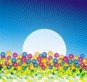 цветки маргаритки предпосылки Стоковое Изображение RF