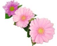 цветки маргаритки собрания Стоковая Фотография