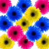 цветки маргаритки Стоковое Фото