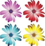 цветки маргаритки иллюстрация вектора