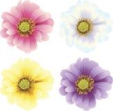 цветки маргаритки бесплатная иллюстрация