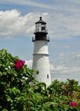 Цветки маяком Стоковые Изображения