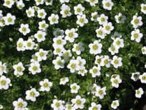 Цветки малые и зеленые листья Стоковые Изображения RF