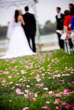 цветки междурядья Стоковые Фотографии RF