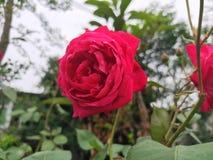 Цветки месяца стоковые изображения rf