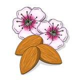 Цветки миндалины и nuts иллюстрация Стоковые Изображения RF