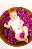 цветки младенца Стоковое Изображение