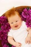 цветки младенца Стоковые Фотографии RF