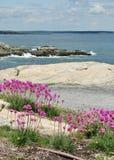 Цветки морем Стоковое Изображение
