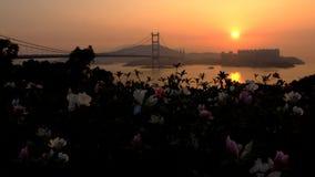 Цветки, мост и здание на заходе солнца Стоковое Изображение RF