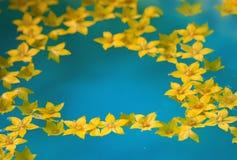 цветки мочат желтый цвет Стоковые Фотографии RF