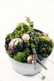 Цветки мха и шарика Стоковые Фотографии RF