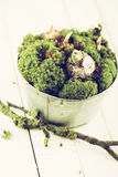 Цветки мха и шарика Стоковое Фото