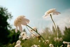 цветки мягкие Стоковое Изображение RF