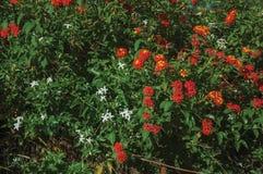 Цветки над зеленым густолиственным кустом в ферме стоковая фотография