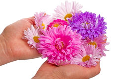Цветки на ладонях Стоковая Фотография RF