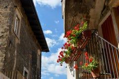 Цветки на балконе Стоковое Изображение