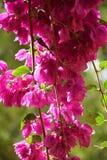 Цветки на ветвях всего дерева Стоковое Изображение