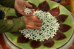 Цветки на воде стоковые фотографии rf