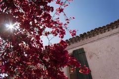 Цветки на городе Parga, Parga Греции Стоковое Фото