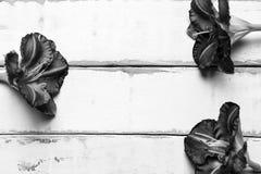 Цветки на деревянном столе стоковое изображение rf