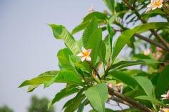 Цветки на зеленом цвете Стоковые Изображения RF
