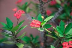 Цветки на зеленом цвете Стоковая Фотография